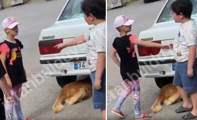 'Senin Köpeğin Diye Canını Yakamazsın' Diyerek Köpeğin Kuyruğuna Basan Arkadaşına Kızan Ufaklık
