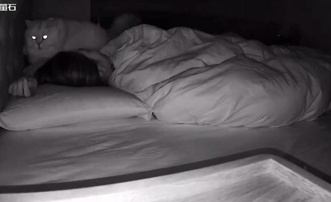 Siz Uyuduktan Sonra Kediniz Ne Yapıyor?