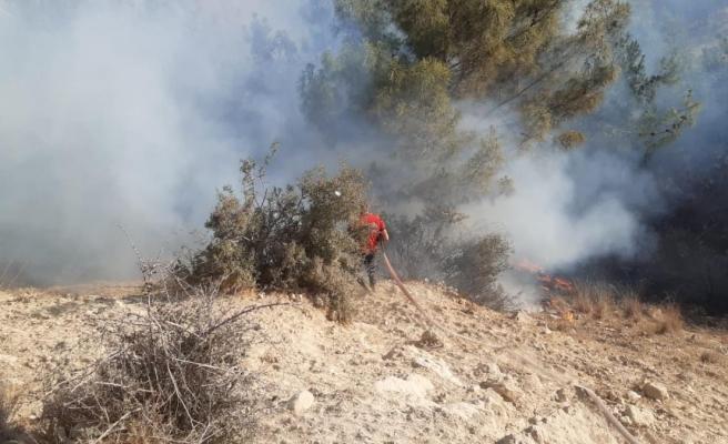 Son dakika haberi: Mersin'de ağaçlık alanda çıkan yangın söndürüldü