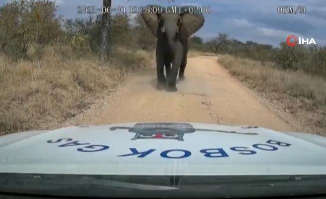 Tabiat Parkında Bir Araca Saldırıp Kaputu Parçalayan Fil