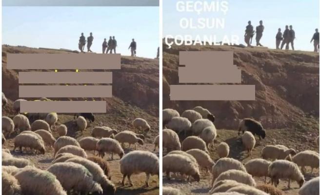TBMM'de 'Gözaltına Alınan Koyunlar' Tartışması: 'Suç mu İşliyorlar, Kamu Düzenini mi Bozuyorlar?'