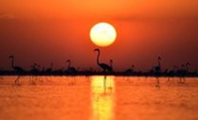 Tuz Gölü Havzası'nda 71 endemik bitki türü tespit edildi