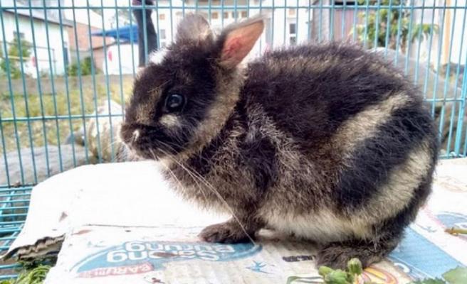 Ünlü tavşanı sosyal medya kurtardı