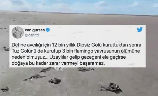 Vahşi Sulama Yüzünden Tuz Gölü'ndeki Binlerce Flamingo Öldü!
