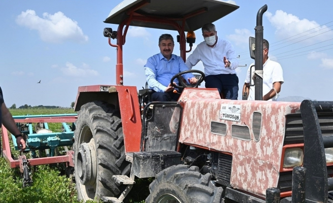 Vali ceketi çıkardı, traktörle yer fıstığı hasadı yaptı