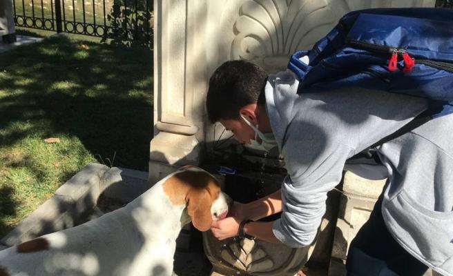 Vefalı köpek, kendisine su içiren öğrenciyi okuluna kadar takip etti