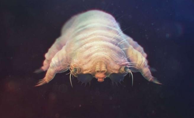 Vücudumuzda yaşayan garip canlılar
