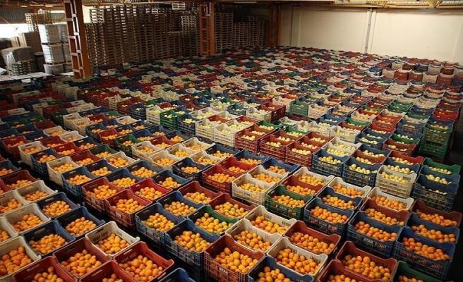 Yaş Sebze Meyvede İhracat Rekoru