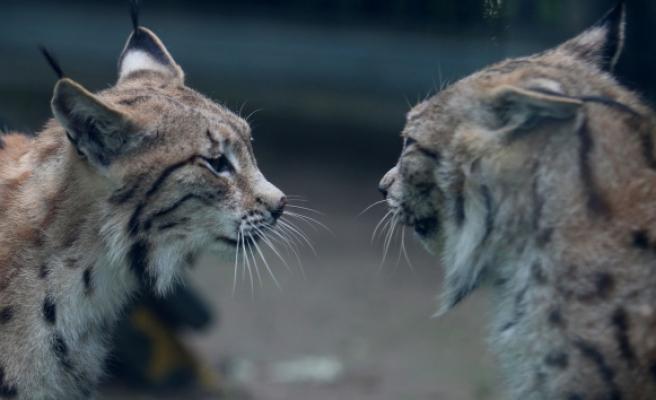 Yeni normalleşmeyle birlikte Bursa Hayvanat Bahçesi kapılarını açtı