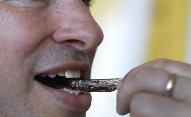 Yenilebilir böcekler yakında süpermarketlerde İsrailli gıda firması, aromalı çekirge şekerlemeleri üretti