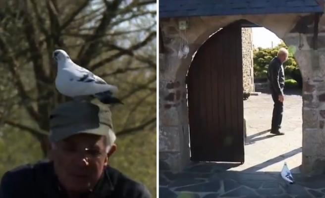 Yıllar Önce Yaralıyken Kurtardığı Güvercin ile Dost Olan Adamın Muhteşem Görüntüleri