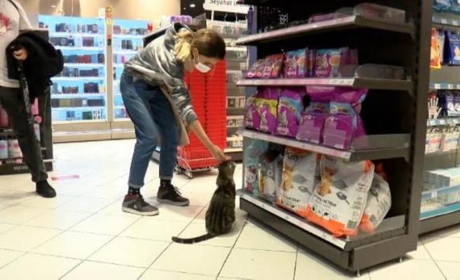 Zorla mama aldıran 'dilenci kedi'