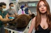 Melis Sezen ölüme terk edilen hayvanların canlarını...