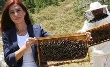 Arılar Covid-19'u tespit edebilir mi?