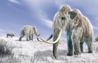 1.65 milyon yıllık DNA keşfedildi