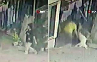 16 Yaşındaki Kız Çocuğuna Pitbulllar Saldırdı:...