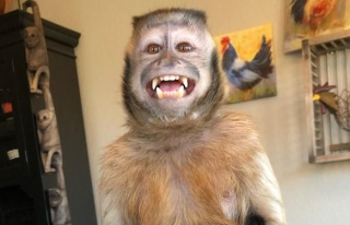 17,6 Milyon Takipçili TikTok Fenomeni Maymun George...