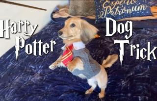 Harry Potter Büyüleriyle Eğitilen Köpeğin Kıskandıran...