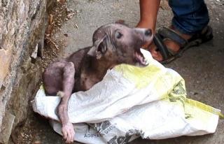 Ölmek Üzereyken Bulunan Köpek Yavrusunun İyi İnsanların...
