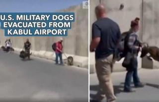 ABD Askeri Köpeklerinin Afganistan'dan Tahliye Edilmesi...
