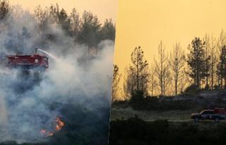 Adana'daki Orman Yangınına Müdahale Sürüyor:...