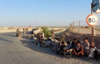 'Afganistan göçü yeni değil' diyen Göç Araştırma...