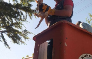 Ağaçta mahsur kalan kedi yavrusunu itfaiye ekipleri...