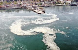 AKP'li Vekile Göre Marmara'daki Müsilajın Nedeni...