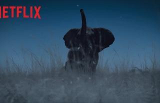 Anlatıcılığını Beren Saat'in Üstlendiği Netflix'in...