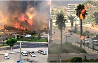 Antalya Manavgat'ta Orman Yangını: Seralar Yandı,...