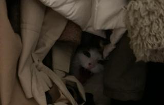 Araştırma: Salgında Sahipleri Eve Kapanan Kediler...