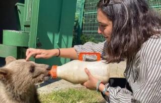Aslıhan Gürbüz yavru ayı besledi