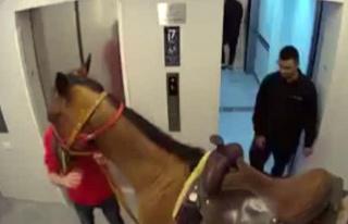Atını asansörle lüks apartmanın üst katına...