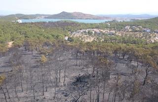 Ayvalık'ta yangında zarar gören bölge havadan...