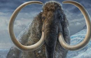 Bahtsız mamutun gizemi çözüldü