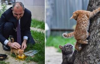 Bakan Gül'den 'Hayvan Hakları Yasası' Mesajı:...