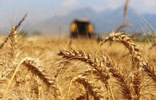 Bazı Tarım Ürünlerinde Gümrük Vergisi Sıfırlandı