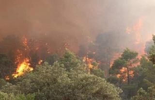 Binlerce Hektarlık Ormanı Yok Edecek Yangınla Uğraşırken...