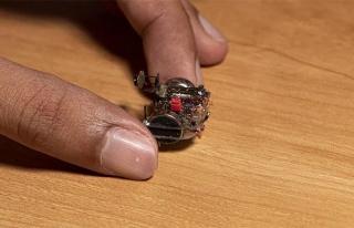 Böceğe kamera takılırsa...