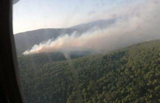 Çeşme'de Orman Yangını: Ekipler Karadan ve Havadan...