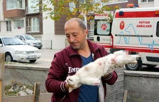 Cinayet Büro Çözdü: Bolu'daki Kedi Ölümlerinin...