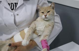 Denizli'de Yaralı Bulunan Kedi Cinsel Saldırıya...
