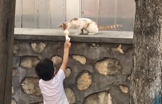 Dondurmasını Sokak Kedisi ile Paylaşan Ufaklığın...
