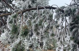 Dünyada sadece iki bölgede olan kristal kar ağaçları...