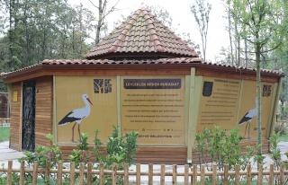 Düşkün leylekler evi Ormanya'da