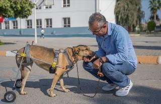 Engelli Hayvanlar İçin Protez Yürüteç Yapan Mehmet...