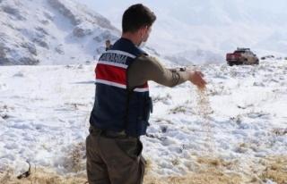 Erzincan'da yılkı atları ve yaban hayvanları...