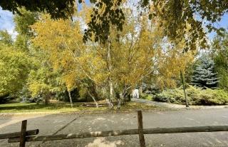 Erzurum'da parklar sonbahar renkleriyle güzelleşti