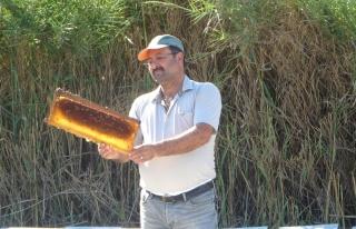 Eşek arıları, Kozan'da arıcıların ve vatandaşların...