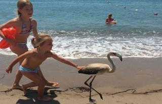 Flamingo'yu sahilde görenler şok oldu